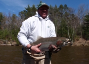 Mark's 2014 Spring Steelhead