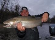Nice Muskegon River Fall Steelhead 2013