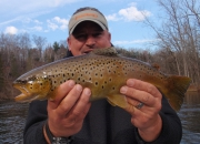 Awesome Colored Muskegon River Brown Trout