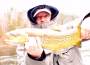 Nice Muskegon River Brown Trout