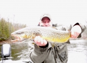 30 inch Muskegon River Brown Trout