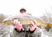 30-Inch Muskegon River Brown Trout