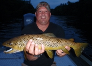 24 Inch Muskegon River Brown Caught On A Dry Fly