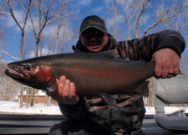 Muskegon River Steelhead