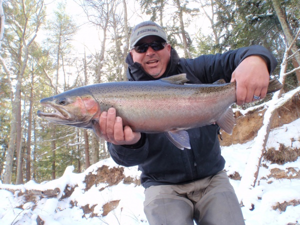 2014 Late Fall Steelhead
