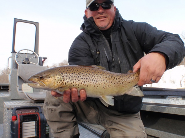 Jan 2015 21 Inch Muskegon River Brown