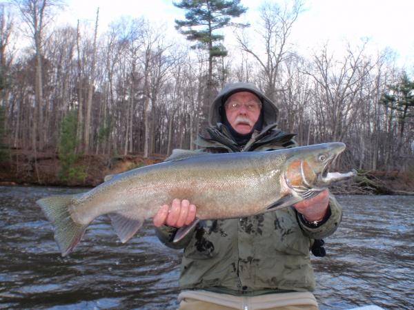Bob with a massive Muskegon river steelhead