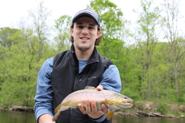 Brown Trout On The Fly!