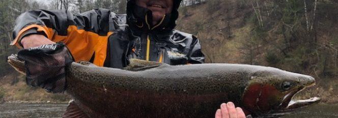 Mid-Mays Cold Spell Helps Warm Steelhead Bite!