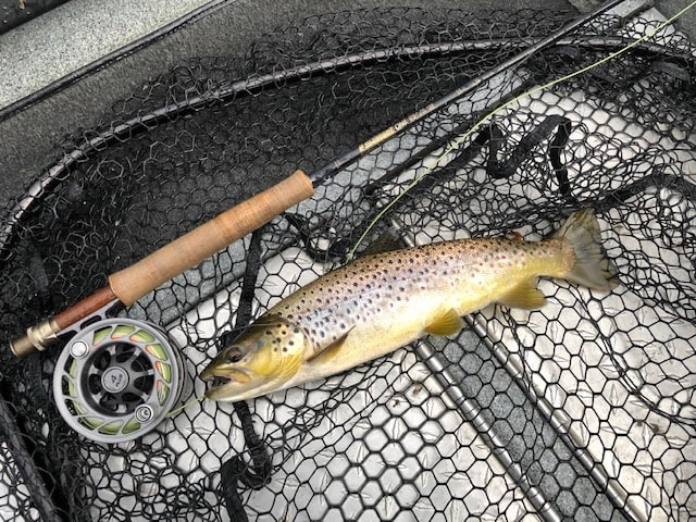 Dry Fly Browns!